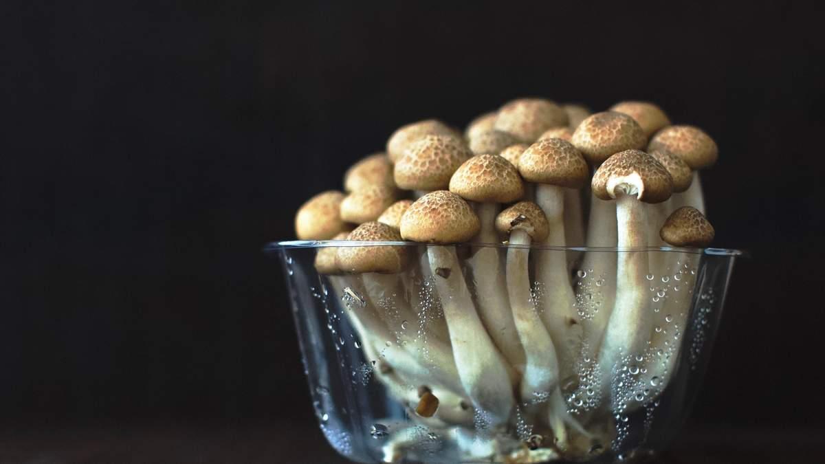 Українські вчені випадково створили пластик з грибів: відео