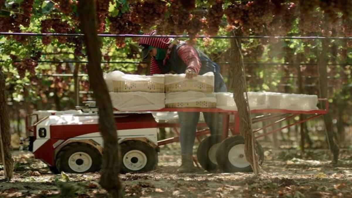 В США представили робота Carry, который будет собирать урожай