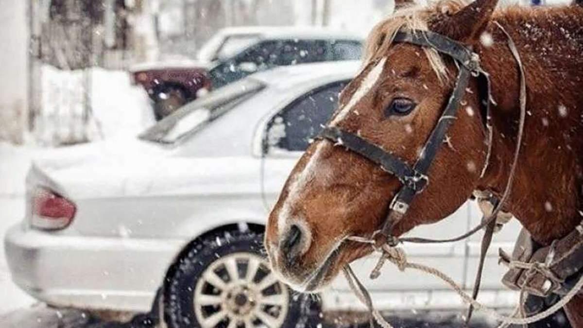 Почему мощность автомобильных двигателей измеряется в лошадях