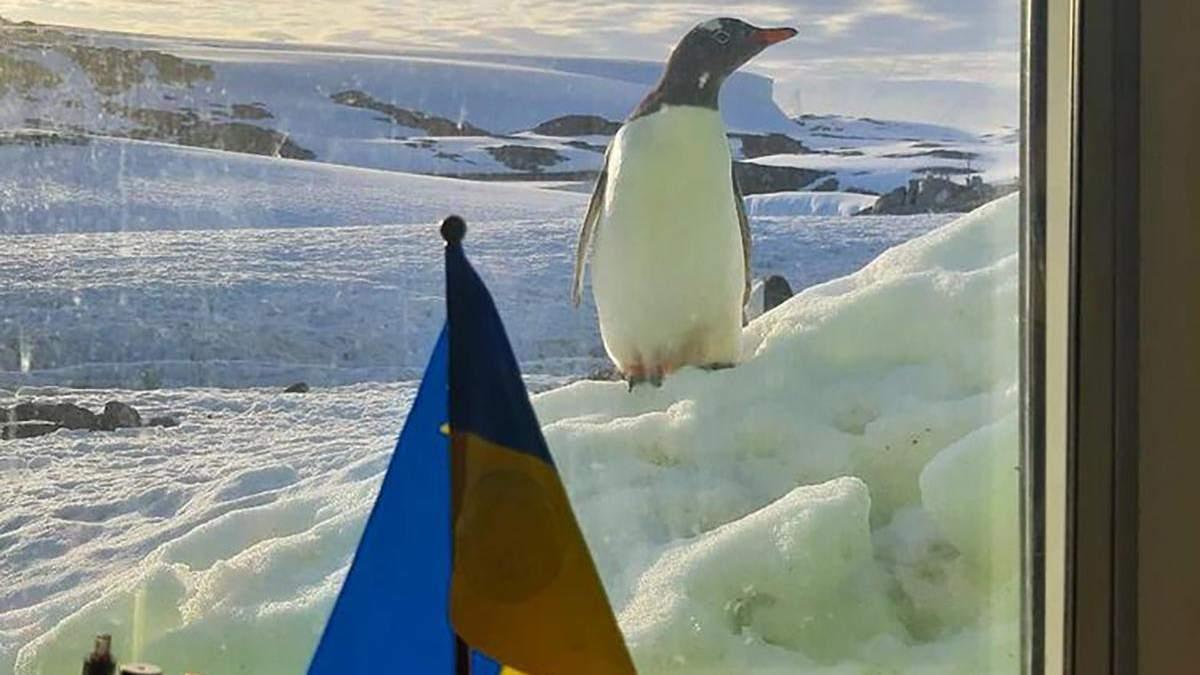 10 фактов о метеорологических исследования украинцев в Антарктиде
