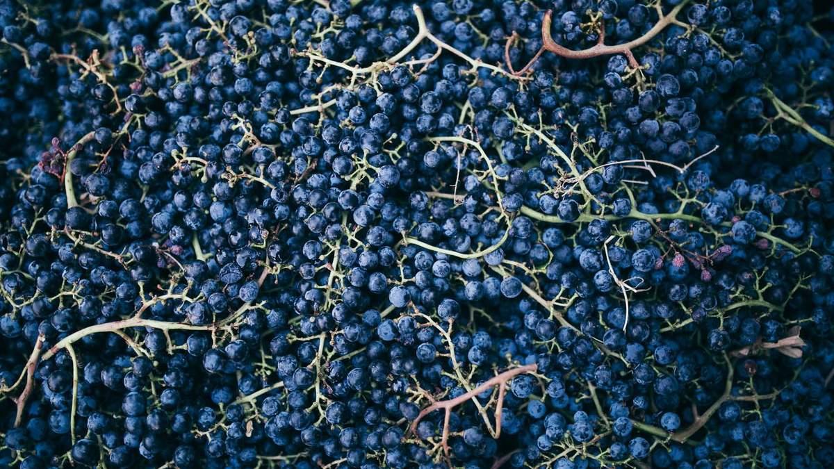 Шато Трубецкого и Курень: украинские виноделы поделились секретами
