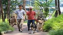 У Південній Кореї створили розумний нашийник: він розпізнає емоції собак – фото, як працює