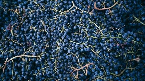 100-летние традиции и новые подходы: украинские виноделы поделились секретами – видео