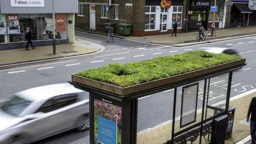 У Великій Британії на дахах автобусних зупинок облаштовують притулки для бджіл