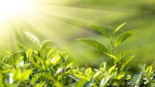 Вчені знайшли спосіб поліпшення фотосинтезу: як це вдалося